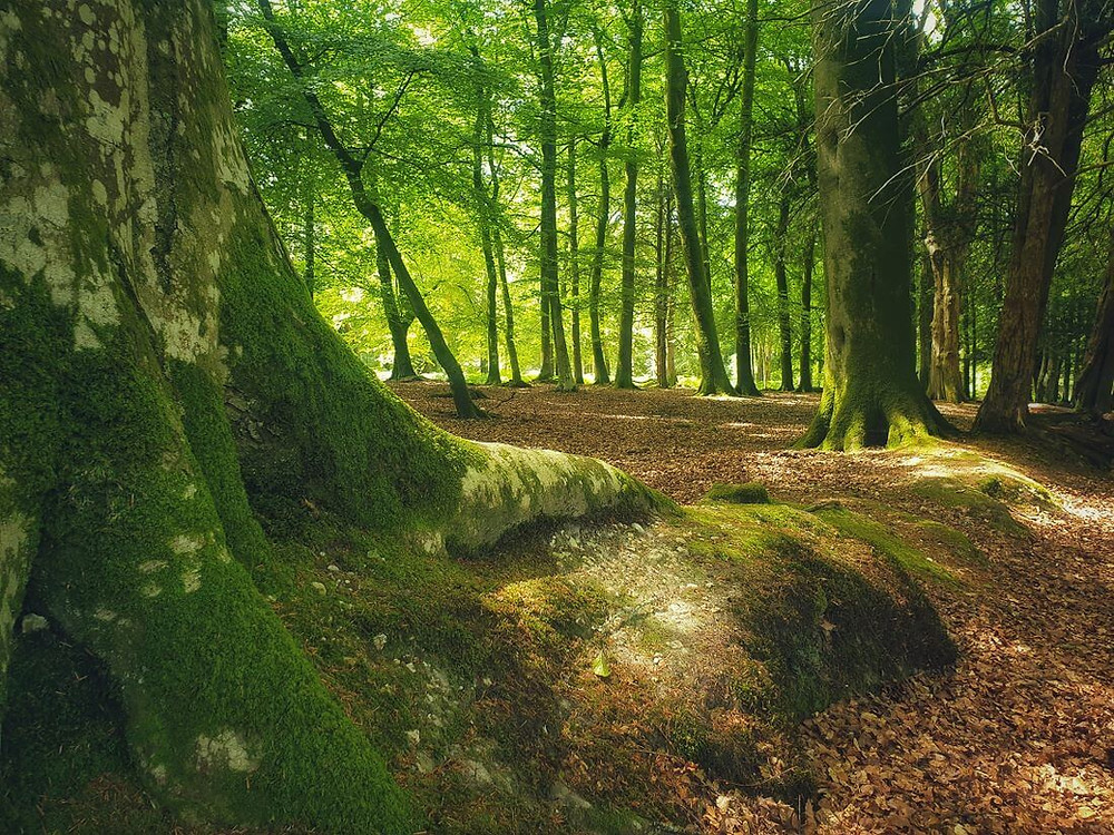 Gorgeous woodlands at Bolderwood Deer Sanctuary in New Forest
