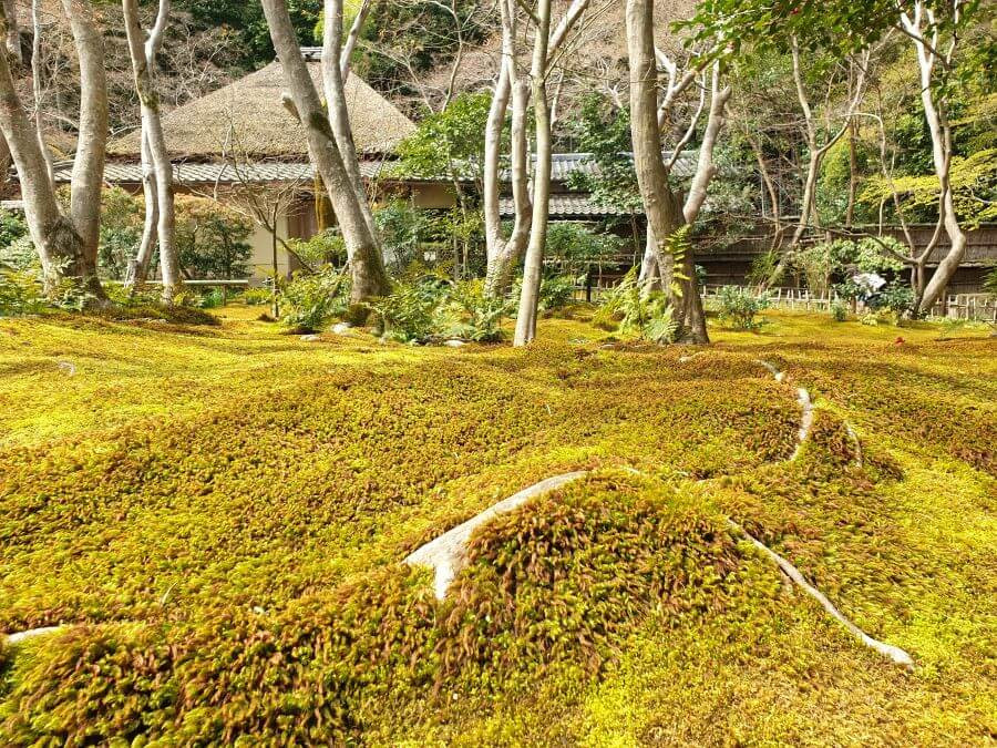 A garden covered in moss, at Giou-ji temple in Kyoto