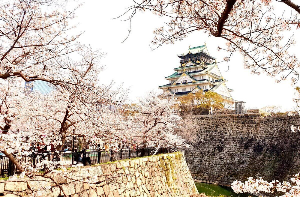 Osaka Castle surrounded by magical springtime cherry blossoms.