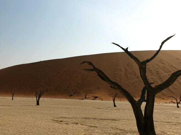 Deadvlei dunes and tree image in Namibia