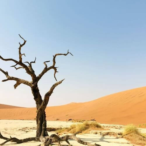 Beautiful Deadvlei dunes and trees
