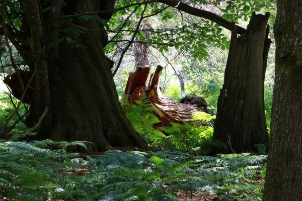 Walk through Bolderwood Deer Sanctuary in England's New Forest