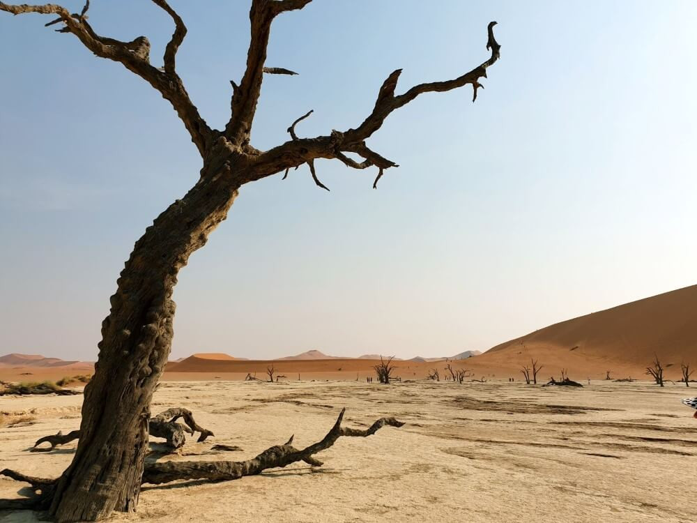 Stunning Deadvlei image, Namibia