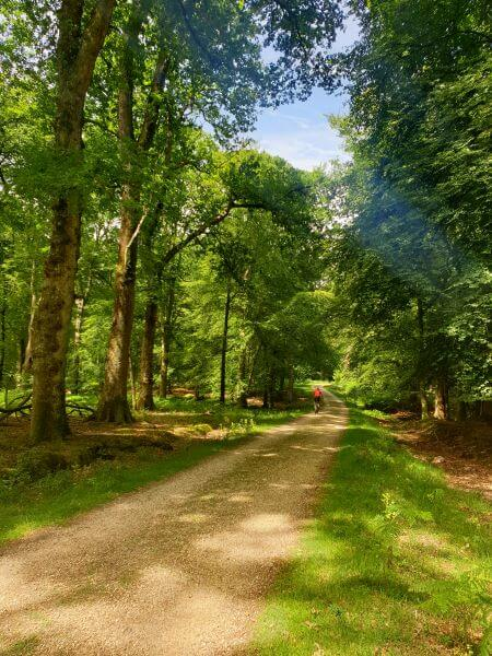 Cycling route through Bolderwood in New Forest National Park