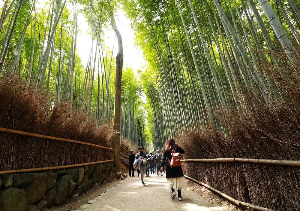 The famous Arashiyama Bamboo Grove in Kyoto, Japan