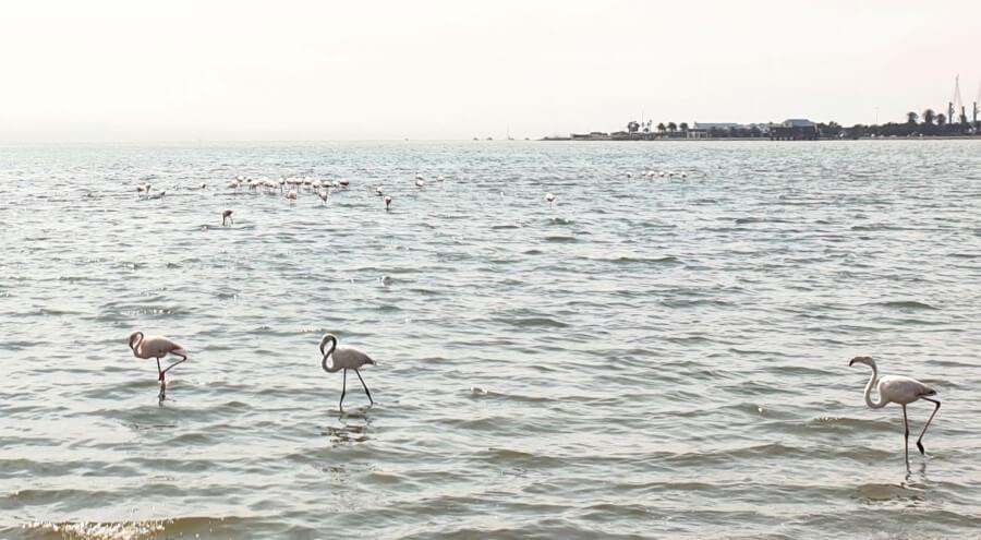 Flamingos in the sea at Walvis Bay, Namibia
