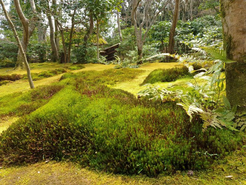 Beautiful moss carpets the ground at Gio-ji temple in Arashiyama