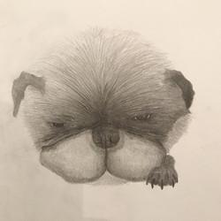 飼い犬をデッサン