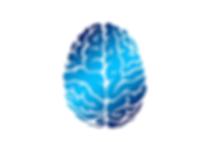 brain-2836401_960_720.png