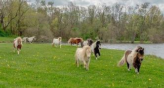horses 3 - Copy.jpg