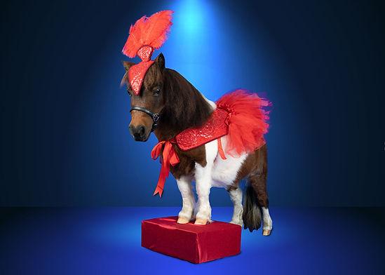 Trinket-Ruby-Red-Dancer-Spotlight.jpg