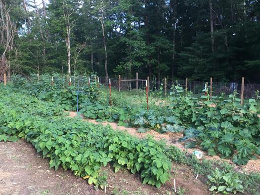 Beans, multiple varieties of squash, cucumbers