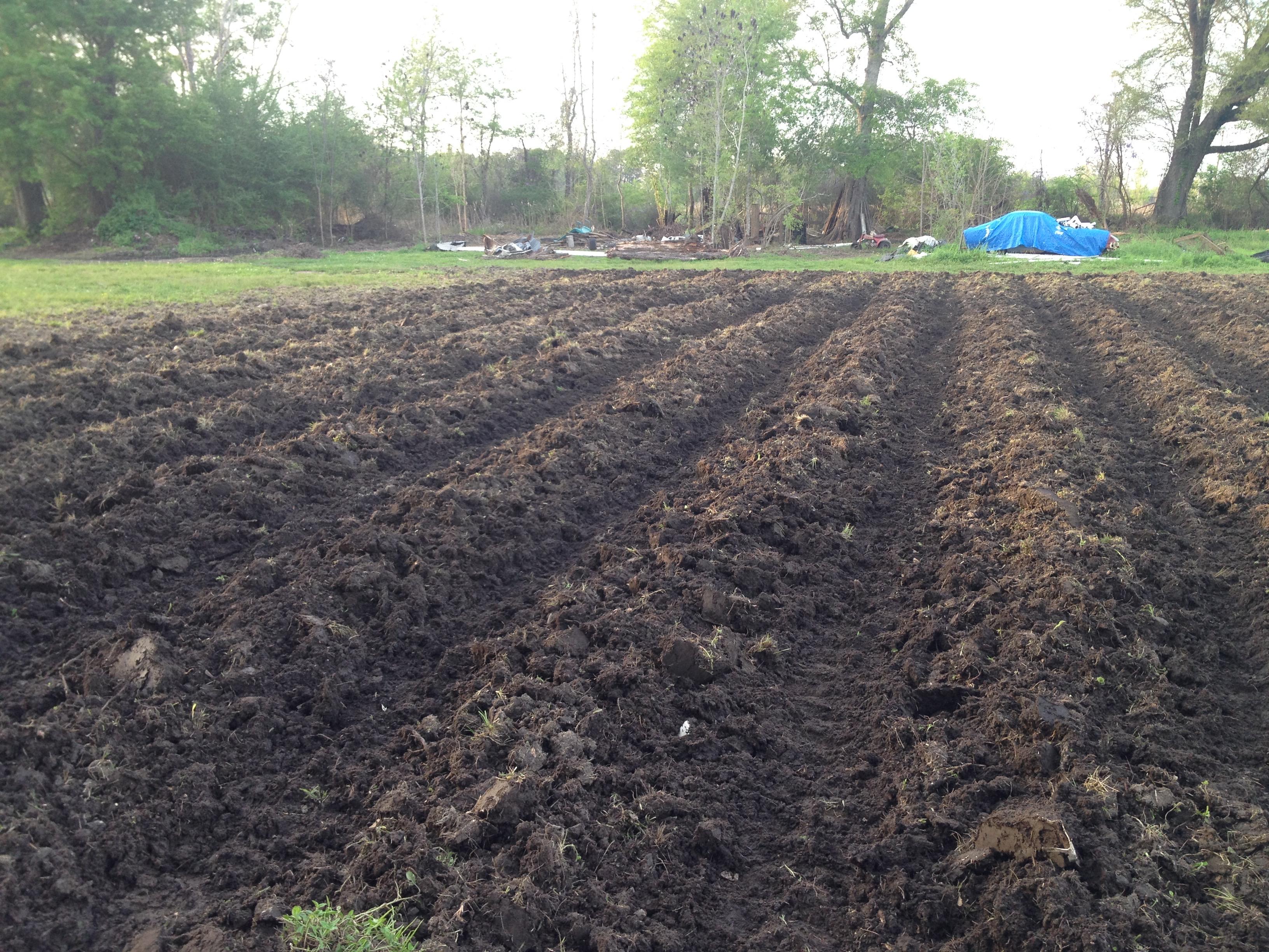 building rows
