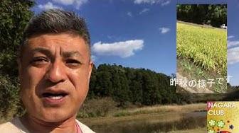 「日本の未来を育てる会」の田んぼで土作り~特殊有機堆肥を撒く~