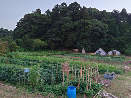 今週7月24日(土)、農士塾フィールドキャンパスが開催されます!〜2021.07.17~