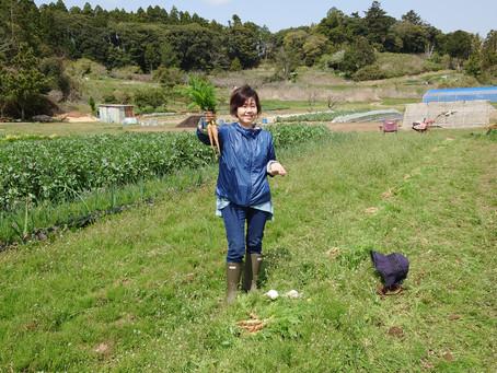 【畑通信】エイプリルフールの定植・収穫~2021.04.01~
