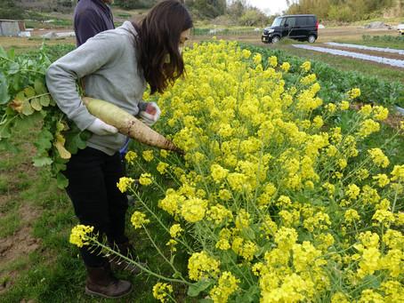 農ガールフィールドキャンパス~収穫から土作りまで~2020.04.07