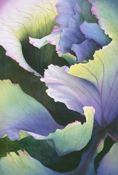 Cabbage Ruffles