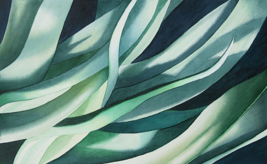 Agave and Shadow