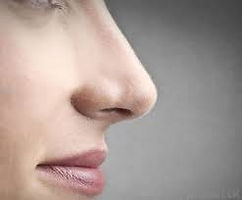 Nose 1.jpeg