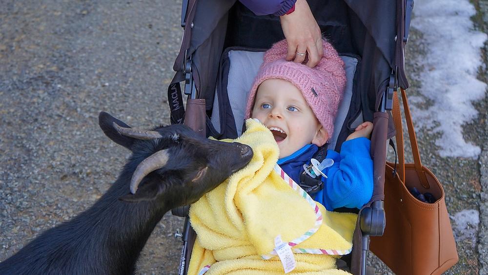 Zoo et piscine des Marécottes Salvan Switzerland family blog