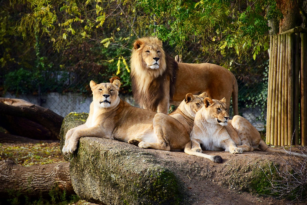 Basel's Zoological Gardens Zolli - Family of 5 Switzerland