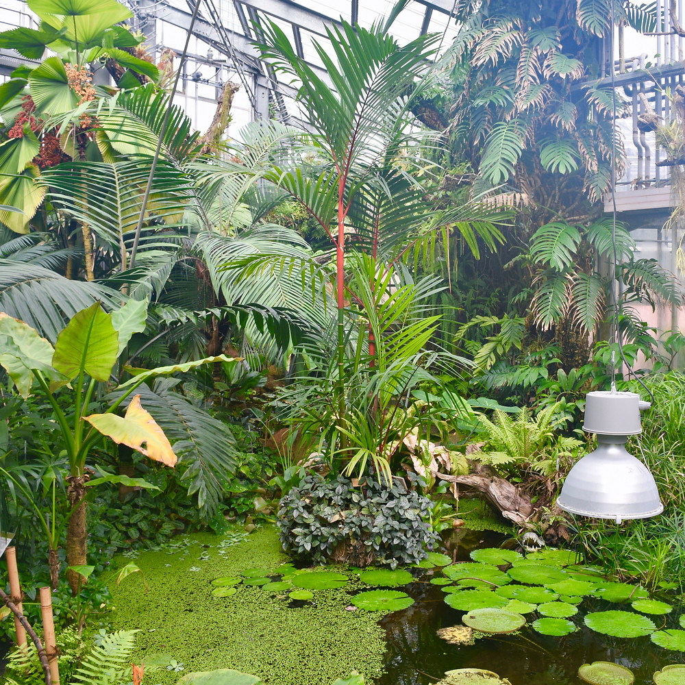 The Family of 5 - The Conservatory and Botanical Garden of the city of Geneva (GE)