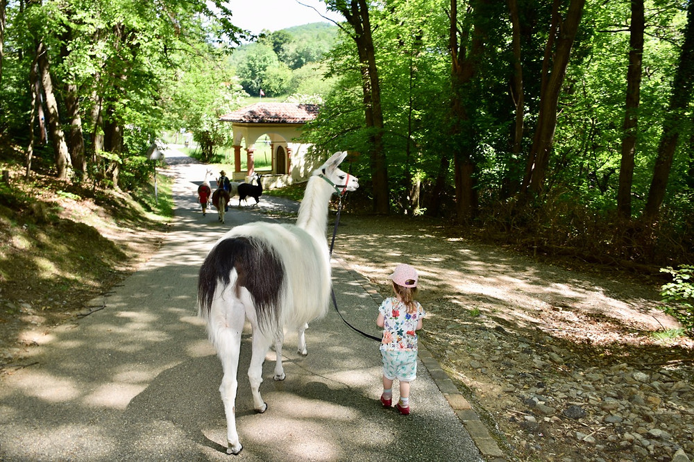 Llama Trekking in Lugano - Swiss Family Travel Blog - Visit Switzerland