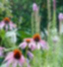 jardin J-1330186.jpg