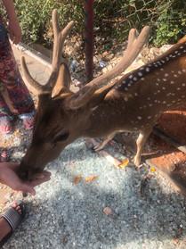 Feeding the deers