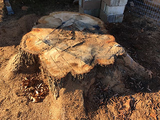 Stump at a residential area in Fort Mill, SC