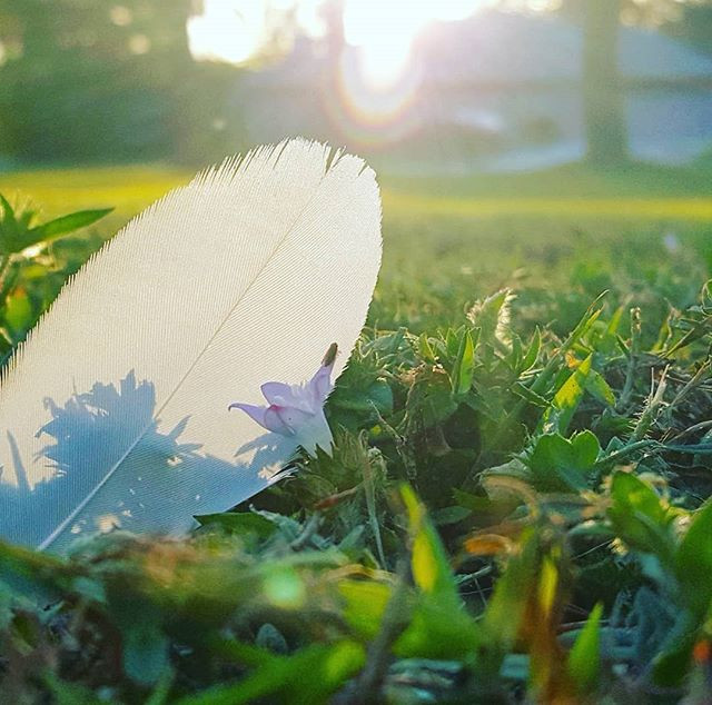 feather in sunlight