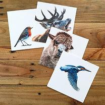 4 cards kingfisher alpaca robin stag.jpg