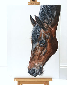 horse painting | horse art | horse picture | horse painting | horse design | horse gift | horse gifts | horse decor | horse head | horse face | horse nose | velvety nose | warhorse | war horse | equine art | equine painting | equine artist | equine decor | equine design | equine picture | equines | pony | pony painting | pony art | pony design | pony face | pony club | pony lovers | horse lovers | horse mad | pony mad