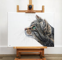 William Scottish Wildcat