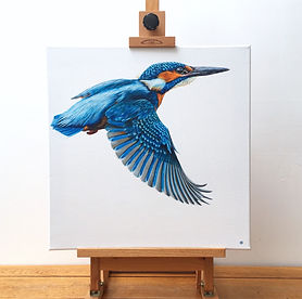 kingfisher art | kingfisher painting | kingfisher design | kingfisher print | kingfisher canvas | kingfisher decor | kingfisher picture | common kingfisher | flying kingfisher | kingfisher in flight | kingfisher blue | common kingfisher | kingfisher gift | kingfisher artwork | kingfisher feathers | kingfisher wings | kingfishers | british birds | british waterways