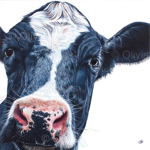 Holstein-Friesian Cow