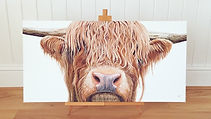 Highland Cow - Olivia de Rivaz