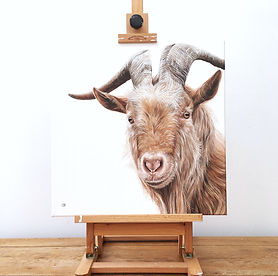 golden guernsey goat | goat painting | goat art | goat print | billy goat | billy goat painting | goat canvas | goat design | golden guernsey goat painting | rare breeds | rare breed goat | british goat breeds | british goat | goat face | goat horns | goat gift | goat decor | goat horns