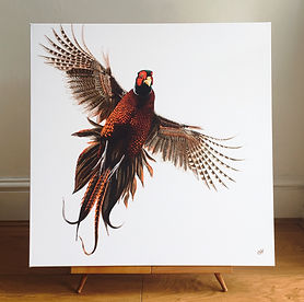 flushed pheasant | pheasant art | pheasant painting | pheasant print | pheasant picture | pheasant design | pheasant feathers | pheasant art print | pheasant wall art | pheasant decor | pheasant design | pheasant lovers | gamebird | gamebird art | gamebird painting | gamebird picture | gamebird print | gamebird design | gamebird wall art | gamebird decor | gamebird wall art | country sports | country sports art | country sports art print | country sports painting | countrysports picture | wildife painting | wildlife picture | wildlife print | british wildlife art | british wildlife painting | british wildlife print | countryside art | country home art | country home decor | country home style | countryside painting