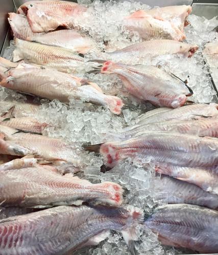 Farm raised catfish