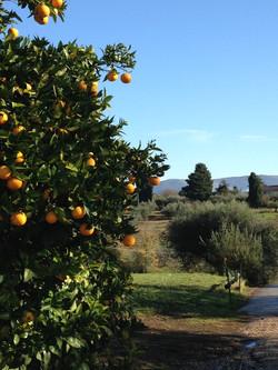 arancio sul viale