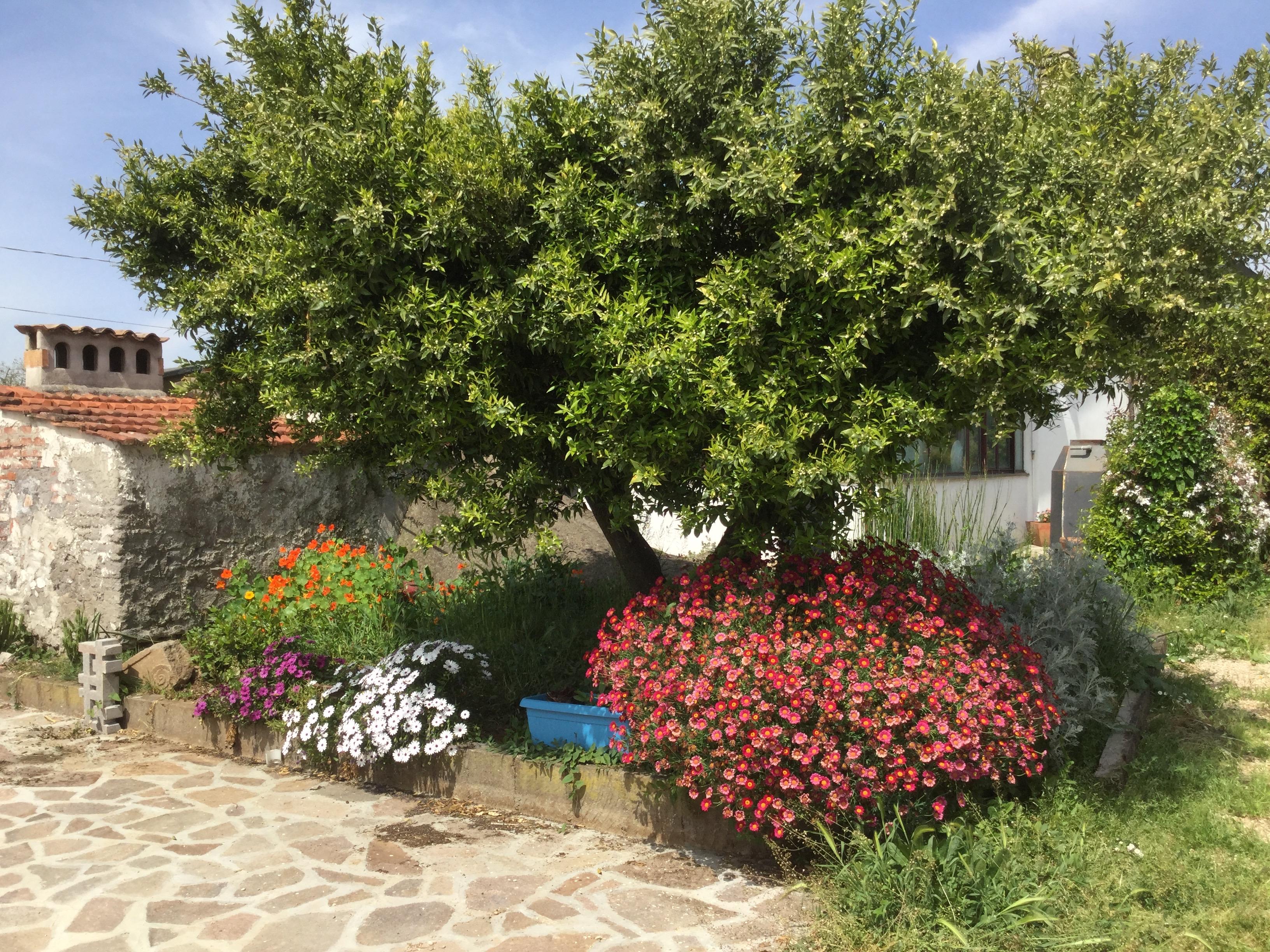 mandarino e fiori