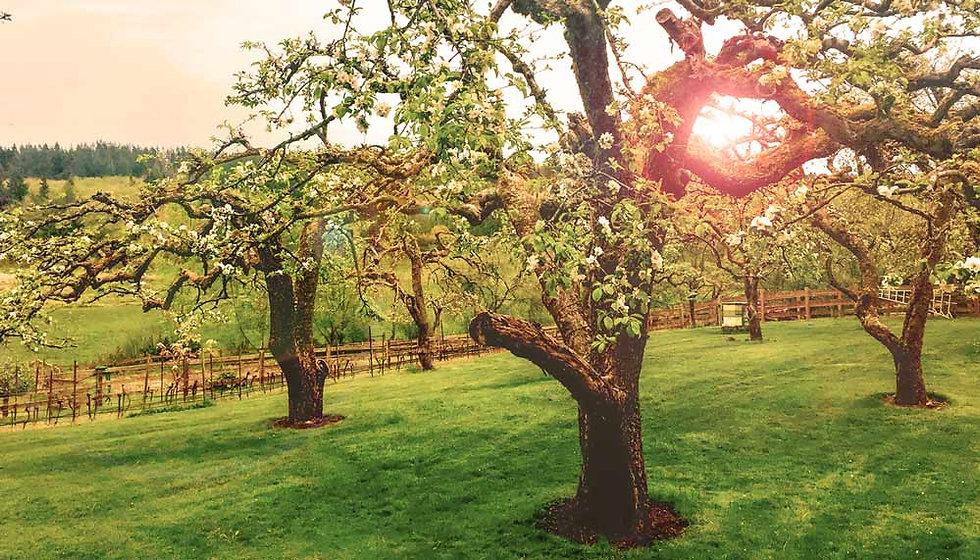 Driftwood_Orchard.jpg