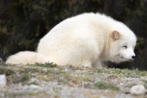 Tierpark_Dälhölzli-14.jpg