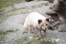 Tierpark_Dälhölzli-12.jpg