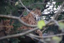 Tierpark_Goldau-115.jpg