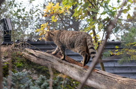 Tierpark_Goldau-122.jpg
