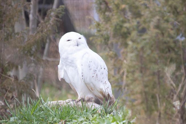 Tierpark_Dälhölzli-18.jpg