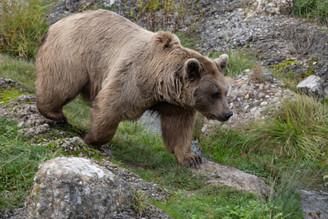 Tierpark_Goldau-104.jpg